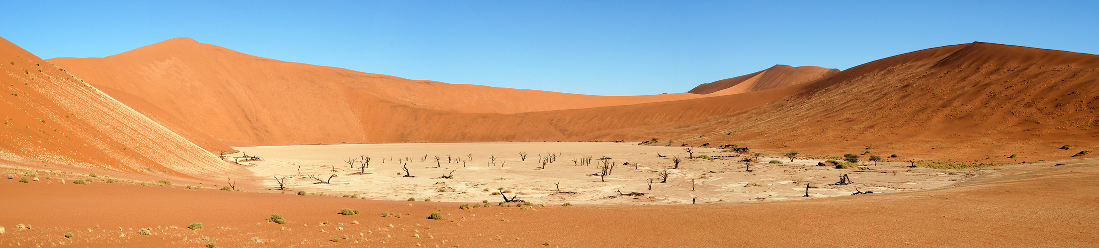 Photo panoramique de [q]Dead Vlei[q]